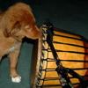 tollermom: (djembe_drummer)