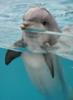 irishdf: (Dolphin)