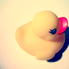 railynnt: (Duck ♥)