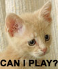 kriscat: (Can I Play? (by Dolimir))