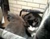 betray_802: (Cats)
