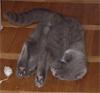 l_sylvanas: (cat)