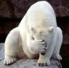 pelageyushka: (медведь)