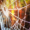 daffodil_dances: (autumn web)
