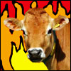 captainliberty: (apocalypse cow)