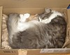 ysilme: Cat curled up in a box (Cat in a box)