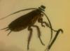 coniferous_you: (cockroach)