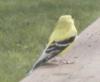 tenderpaw08: (bird)