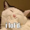 dusk037: (*LOL* (cat))