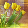 gemspegasus: (Yellow tulips)