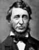 o_c_c_u_p_y: (Thoreau)