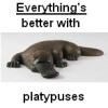 edschweppe: (platypus)