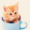 tellemonstar: Stock: kitty in teacup (kitty)