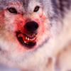 chrryblssmninja: (blame_bloodwolf)