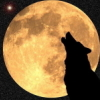 notrestingyet: (wolf - howl at the moon)