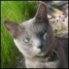 belayano4: (cat)