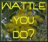 keolin: (wattle)