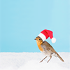 mysecretsanta: bird wearing a santa hat (Default)