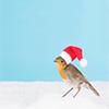 mysecretsanta: bird wearing a santa hat (Default)
