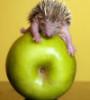 charlz_lynn: (hedgehog)