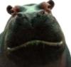 charlz_lynn: (hippo!)