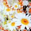 restlessbrook: (Flowers)