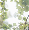 inmymargins: Green leaves against white sky. (Green Leaves)