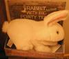 firsttiger: (bunny)
