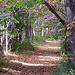 firsttiger: (Path)