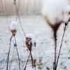 hopeful_dreams: (flowers)
