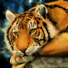 laughtersmelody: (Tiger)