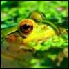 zendra: (frog)