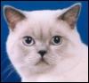 zendra: (angrycat)