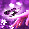 deanshot1: (Butterfly)