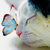 deanshot1: (Butterfly on kitten's nose)