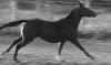 iselima: (Running Horse)