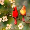 hughville: (Cardinals)