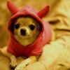 hughville: (Chihuahua)