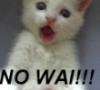 shnells: (no wai!)