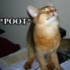 shnells: (poot!)