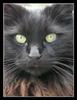 fivecats: (Hader)