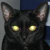 em_angharad: (Cat)