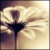 lils_s_skin: (flower)