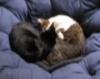 winterbadger: (cat yin-yang)
