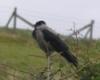winterbadger: (birds)