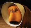 killerweasel: (cone of shame :( by killerweasel)