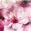 """tinny: A pink cherry blossom - """"Zen"""" (__zen pink cherry blossom)"""