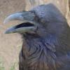 raven999_13: (Ворон)