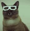 maxcelcat: (Dubstep Cat)