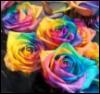 emmawulfstan: (roses)